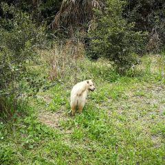 지우파오제 관광단지 여행 사진