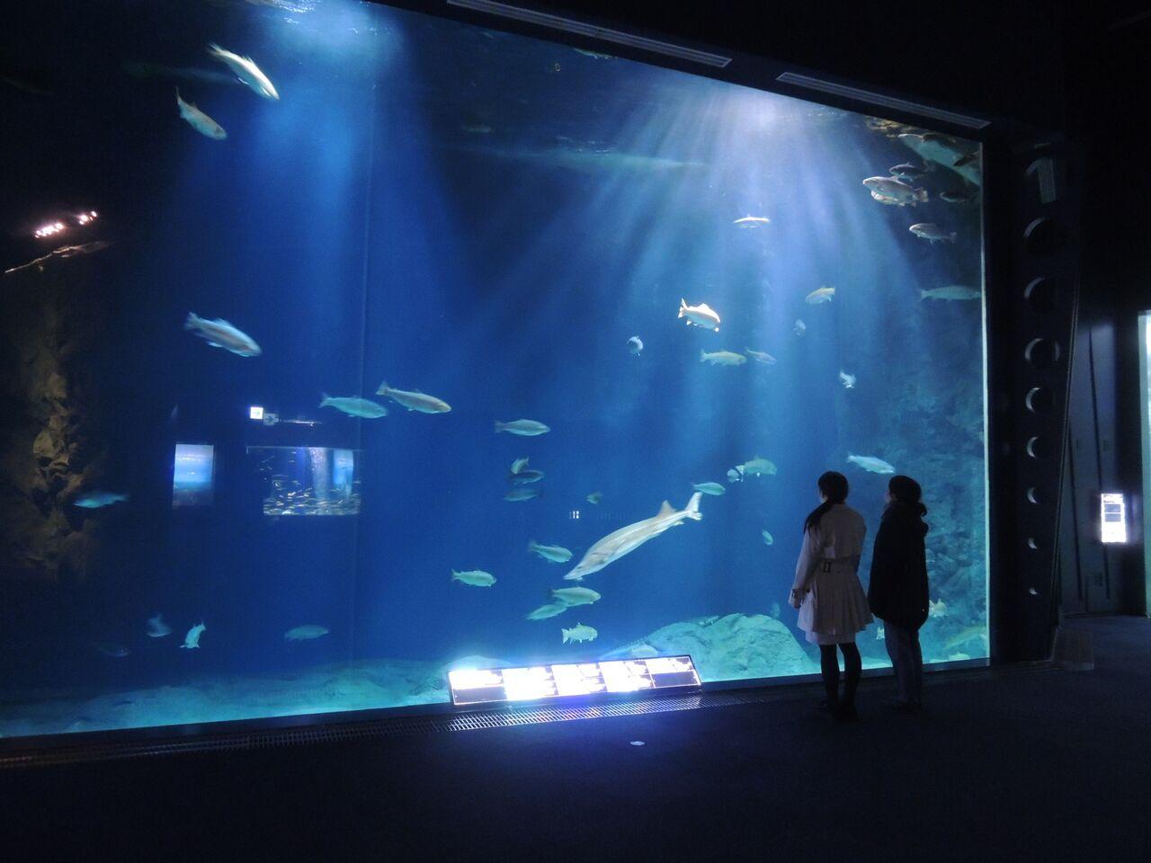 サケのふるさと 千歳水族館チケット