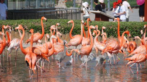Shijiazhuang City Zoo