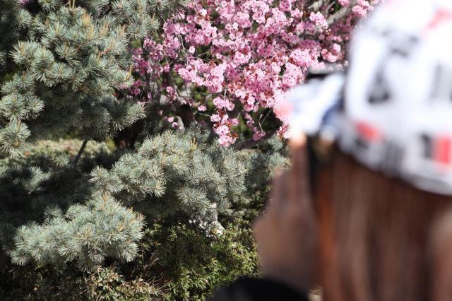 츠산 관광단지