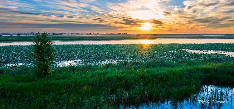 Longfeng Wetland1