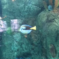 The Aquarium of the Pacific User Photo