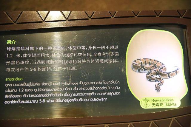泰國奇境:暹羅蛇園的童真之旅