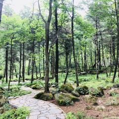 上壩河國家森林公園用戶圖片