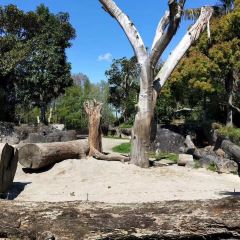 Auckland Zoo User Photo