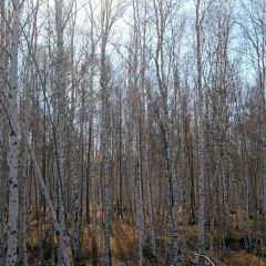 백화림 여행 사진