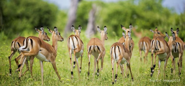 Chobe National Park2