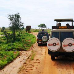 Mgahinga Gorilla National Park User Photo