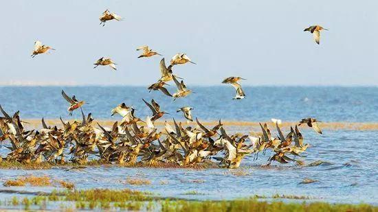 """遼寧迎""""最佳觀鳥季"""" !上千只天鵝飛來,還有珍稀鳥類聚集…週末約起吧"""