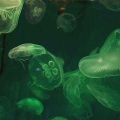 大連聖亞海洋世界用戶圖片