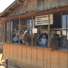 嵐山岩田山猴子公園用戶圖片