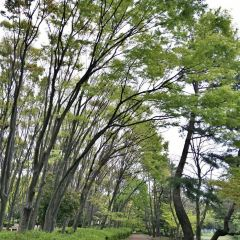 名城公園用戶圖片