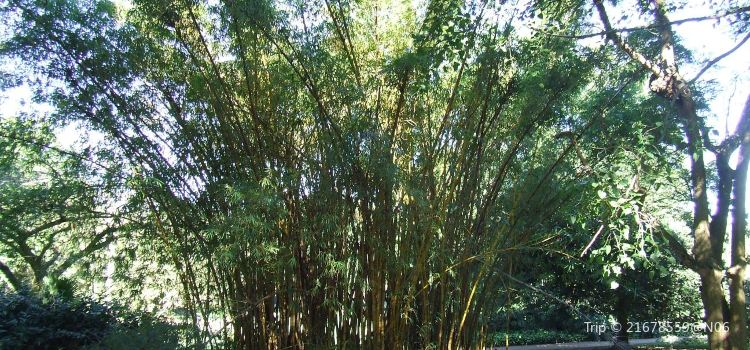 Durban Botanical Gardens1
