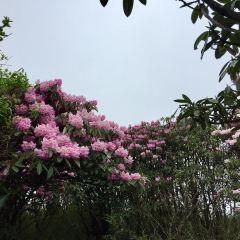 杜鵑花海景區用戶圖片
