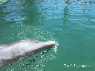 The Dolphin Experience