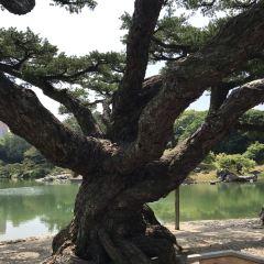 Sumiyoshi Shrine User Photo