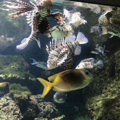 安特衛普動物園用戶圖片