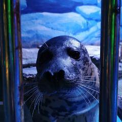 Happy Ocean World User Photo