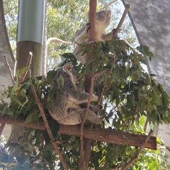 考拉保育中心用戶圖片