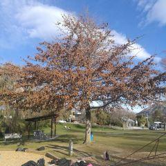 That Wanaka Tree用戶圖片