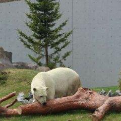 札幌市圓山動物園用戶圖片