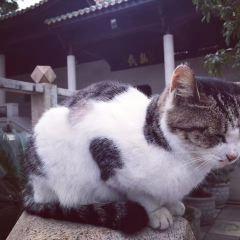 雲棲禪寺用戶圖片