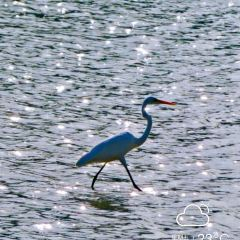 Sanya River Birds Nature Reserve User Photo