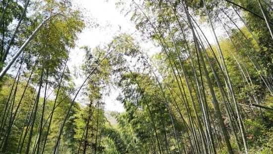 룽우전 시산 삼림공원