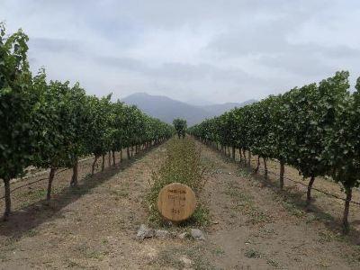 Emiliana Organic Vineyards