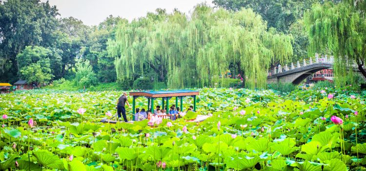 Purple Bamboo Park Travel Guidebook Must Visit Attractions In