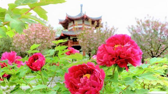 隋唐城遺址植物園