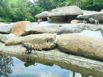 巴伐利亞州立動物園