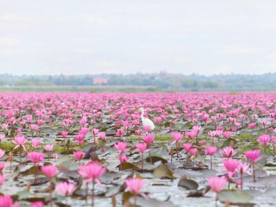 Talay Bua Dang (Red Lotus Lake)
