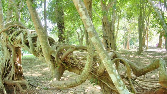 Chinese Academy of Sciences Xishuangbanna Tropical Botanical Garden