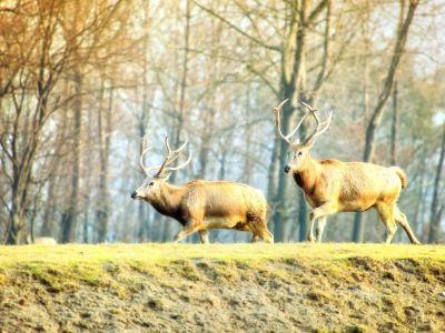 Dafeng Elk National Nature Reserve