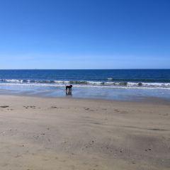 Queens Beach用戶圖片