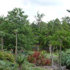 Brisbane Botanic Gardens Mt. Coot-tha User Photo