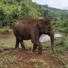 Elephant Valley Project User Photo