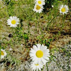 Leavenworth User Photo