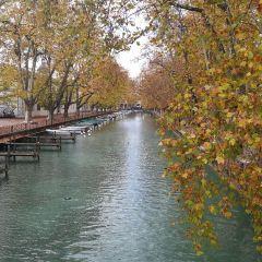 阿納西愛之橋用戶圖片