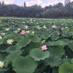 Honghu Park User Photo