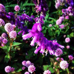 Royal Botanic Gardens Melbourne User Photo