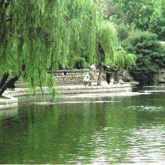 Wuying Tam User Photo
