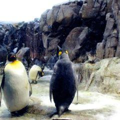 Odense Zoo User Photo