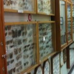 Museum of World Insects and Natural Wonders User Photo