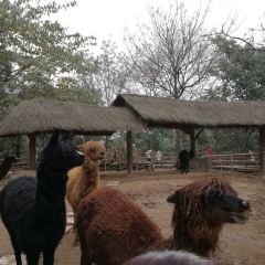 Chongqing Zoo User Photo