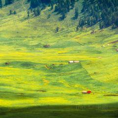 高山草甸用戶圖片