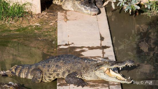 Siem Reap Crocodile Farm