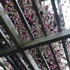 Yeomiji Botanical Garden User Photo