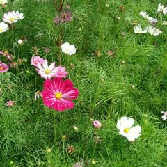 Kelsang Flowers Park User Photo